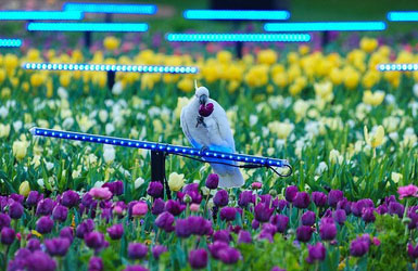 Floriade Highlights